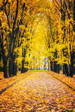 Alley in autumn park Stock Image