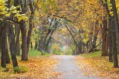 Alley in autumn park Stock Photo
