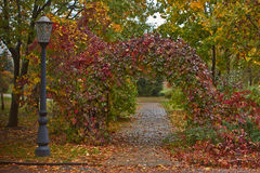 Alley in autumn park . Royalty Free Stock Image