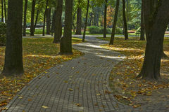 Alley in autumn park. Royalty Free Stock Photo