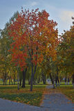 Alley in autumn park. Stock Photography