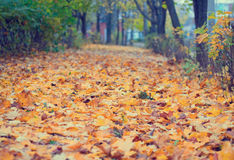 Alley in the autumn park Stock Image