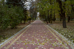 Alley in autumn park Nalchik. Stock Images