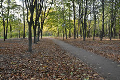 Alley in the autumn Park. Royalty Free Stock Photo