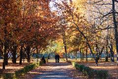 Alley autumn park. The picture shows a colorful autumn alley in the park Stock Images