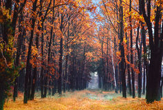 Alley in the autumn park. Royalty Free Stock Photography