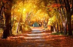 Alley in the autumn park Stock Photos
