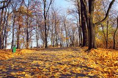 Alley in autumn park at sunny day Royalty Free Stock Photos