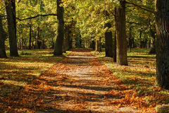 Alley in autumn park. Very beautiful alley surrounded by large trees, strewn with yellow autumn leaves, crossed shadows and light Stock Photos