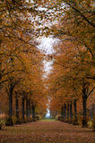 Alley in the autumn park Royalty Free Stock Photo