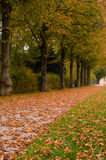 Alley in the autumn park Royalty Free Stock Photography