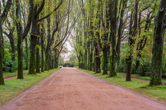 Alley avenue with tall trees green grass gravel walk path way road park Royalty Free Stock Image