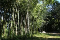 Alley of bamboo in the Central Botanical Garden stock images