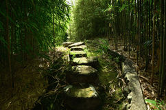 An alley through the bamboo grove of Kyoto Japan. The picture of pathway through bamboo grove and stone steps in Kyoto Japan Stock Photo