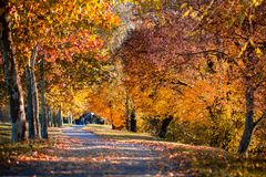 Alley of a beautiful autumn trees in a park stock photography