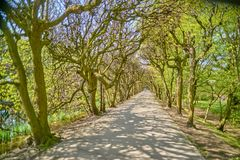 Alley in a beautiful old park in Gdansk Oliwa Poland.  Stock Photos