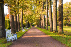 The Alley With Benches In Alexander`s  Park In Pushkin. The alley with benches in Alexander`s park in Pushkin town Russia sunny autumn landscape Stock Images