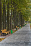 Alley with benches in park. Stock Photography