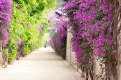 Alley with blooming flowers Stock Images