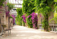 Alley with blooming flowers. In spring park Royalty Free Stock Photos