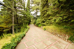 Alley in the botanical garden Royalty Free Stock Photography