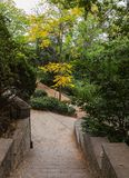 Alley in botanical garden Stock Photography
