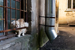 Alley Cat. Street Cat on the windowsill Royalty Free Stock Photography