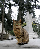 Alley cat. In a Greek cemetery stock image