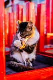Alley Cat On Closed Restaurant Royalty Free Stock Photography