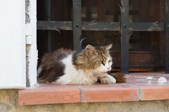 Alley cat Royalty Free Stock Image