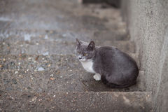 Alley cat in the street Stock Image