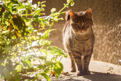 Alley cat in the sun Stock Photos