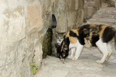 Alley Cats Royalty Free Stock Images