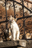 Alley cats on iron fence Stock Image