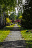 Alley cemetery. Green alley cemetery with trees Royalty Free Stock Image