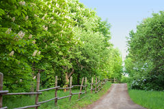 Alley with chestnut trees Royalty Free Stock Photos