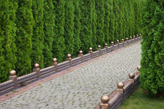 Alley in city park. Alley in the city park of ornamental trees Royalty Free Stock Photography