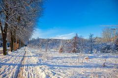 Winter sunny alley Royalty Free Stock Images