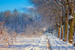 Winter sunny alley Royalty Free Stock Photography