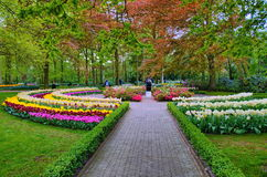 Alley among colorful tulips, Keukenhof Park, Lisse in Holland Stock Photo