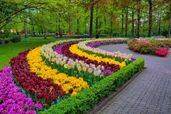Alley among colorful tulips, Keukenhof Park, Lisse in Holland Stock Photos