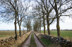 Alley by a country road Royalty Free Stock Photos