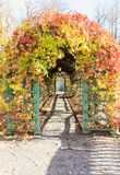 Alley covered with colorful fall leaves Stock Photography