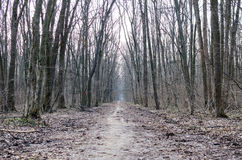 Alley in a creepy forest during late winter with rotten leaves royalty free stock photos