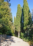 Alley of cypresses Stock Photo