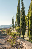 Alley of cypresses during irrigation Stock Images