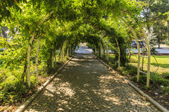 Alley decorated with plants in the form of arches Stock Image