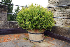 Alley with decorative boxwood Stock Photos