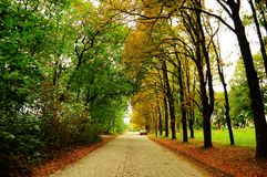 Alley with the different trees. Alley of different trees at the turn of the seasons Royalty Free Stock Images