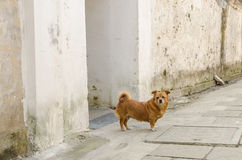 Alley dog Stock Photography